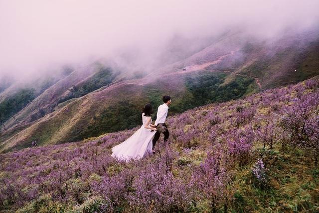 Đây được xem là thời điểm lý tưởng để chinh phục Tà Chì Nhù và ngắm sắc tím lãng mạn của loài hoa dại này. Ảnh: Hai Le Cao
