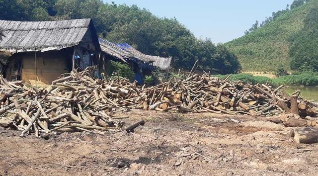Rất nhiều loại gỗ rừng được mua về tập kết để đốt than.