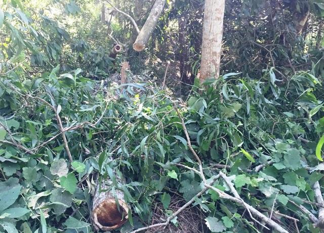 Đã nhiều lần các cơ quan chức năng kiểm tra, phát hiện và ra quyết định xử lý vi phạm hành chính, tịch thu tang vật là gỗ đã bị khai thác trái phép trong rừng đặc dụng Hàm Rồng.