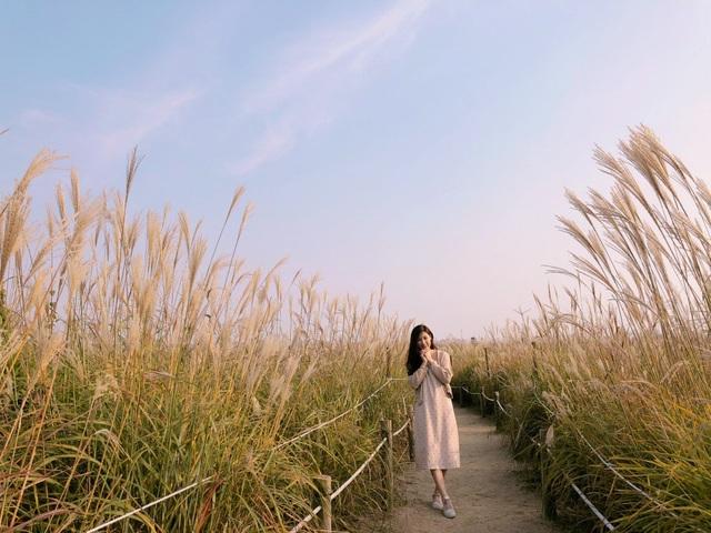 Cánh đồng lau ở công viên Sky Park (tên khác: Haneul), suối Cheonggyecheon, công viên Lotte World, bảo tàng ở Dongdaemun và một số khu mua sắm Myeongdong, Sinchon, Gangnam...