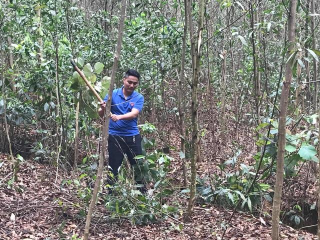 Ngoài công việc chăm sóc đàn lợn và gà, những lúc rảnh rỗi anh Nguyễn Mạnh Tuấn lên rừng chăm sóc rừng cây keo. Ảnh: Cảnh Thắng