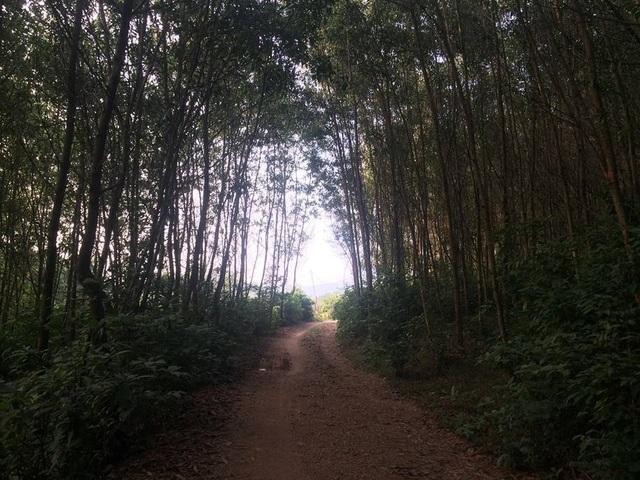 Còn đường nguyên liệu được gia đình anh Nguyễn Tuấn Mạnh đầu tư xây dựng lên từ chân đồi đến đỉnh đồi để tiện thu hoạch keo lai. Ảnh: Cảnh Thắng
