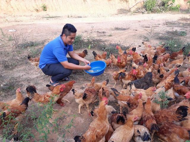 Sản phẩm gà thả đồi của Tuấn được nhiều nhà hàng trên địa bàn tỉnh Nghệ An ưa chuộng. Ảnh: Cảnh Thắng