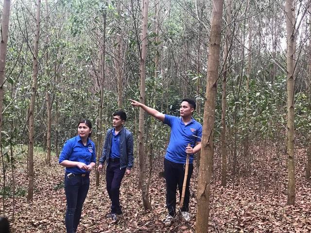 Ngoài mô hình trang trại nuôi lợn, gà anh Nguyễn Mạnh Tuấn còn đầu tư trồng rừng để cải thiện môi trường và kiếm thêm thu nhập. Ảnh: Cảnh Thắng