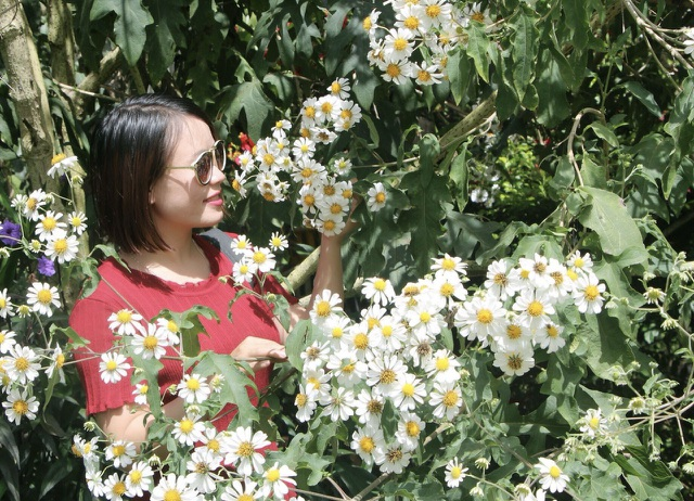 Mê mẩn với loài hoa dã quỳ trắng tinh khôi độc đáo tại Đà Lạt - 4