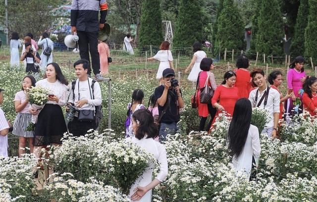 """Những ngày này, vườn cúc họa mi ở bãi đá sông Hồng (ngõ 264 Âu Cơ – Tây Hồ) gần như """"thất thủ"""" bởi phải đón một lượng khách quá đông."""