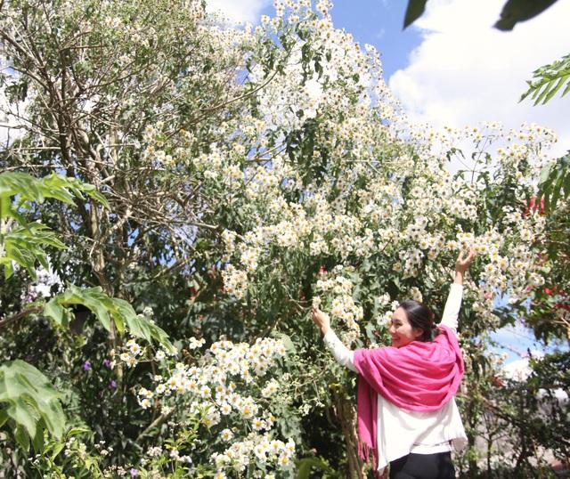 Cây dã quỳ trắng độc đáo tại Đà Lạt đã thu hút bao du khách đếm tham quan và chụp ảnh