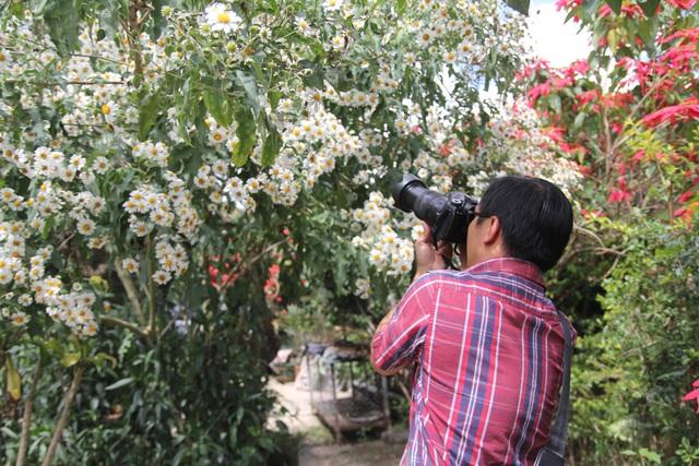 Mê mẩn với loài hoa dã quỳ trắng tinh khôi độc đáo tại Đà Lạt - 7