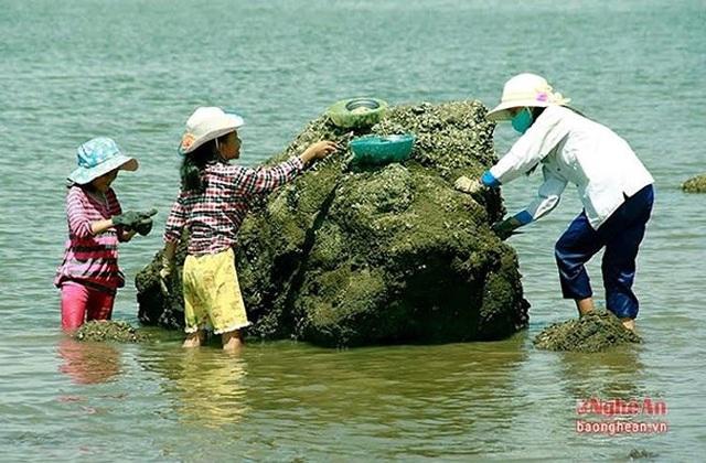 Dịp nghỉ hè, các em học sinh cũng tranh thủ đi đục hàu để phụ giúp bố mẹ. (Ảnh: Báo Nghệ An)