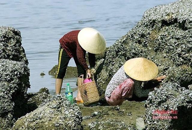 Ở các lèn đá nhấp nhô nơi biển Nghi Thiết, Nghi Lộc, Nghệ An, những người phụ nữ vẫn lụi hụi, miệt mài với nghề đục hàu mưu sinh. (Ảnh: Báo Nghệ An)
