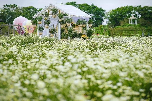 Hoa khôi Imiss Thăng Long 2017 dịu dàng với cúc họa mi - 11