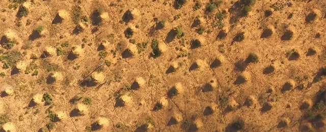 Bí ẩn những gò mối 4.000 năm tuổi ở Brazil - 1