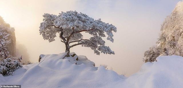 Những bức ảnh đẹp nhất giải thưởng Nhiếp ảnh quốc tế Epson - 20