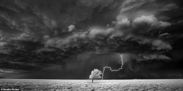 Những bức ảnh đẹp nhất giải thưởng Nhiếp ảnh quốc tế Epson - 21