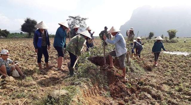 Gần 11.000 người dân huyện miền núi Tuyên Hoá ra đồng diệt chuột...