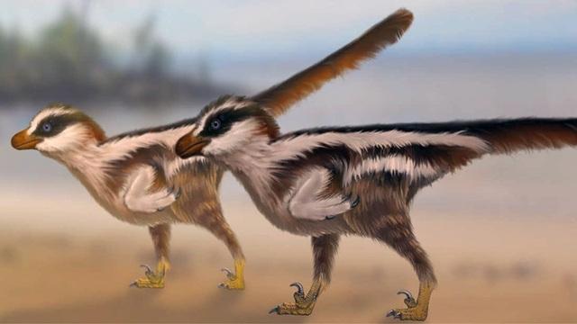 Các nhà cổ sinh vật học vừa mới tìm thấy dấu chân của một loài khủng long kì lạ có kích thước chỉ 1 cm.