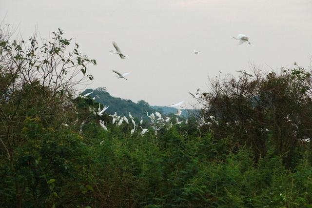 Mỗi khi có người lạ đến, đàn chim lại tung cánh bay lên bầu trời, phát ra tiếng gọi bầy để tránh gặp nguy hiểm.