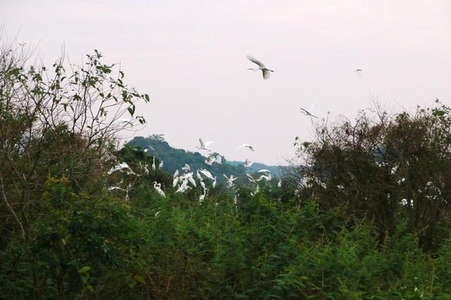 Mãn nhãn trước vườn chim hàng nghìn con bên sông Hoàng Long - 13