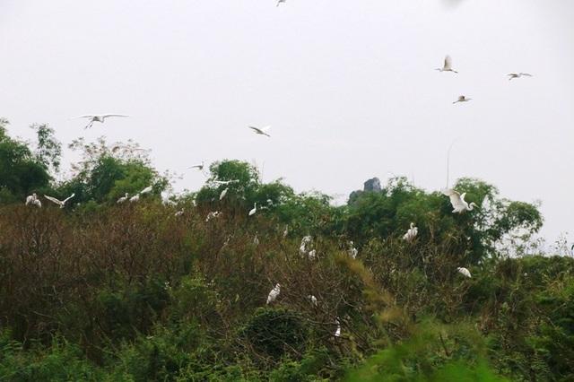 Mãn nhãn trước vườn chim hàng nghìn con bên sông Hoàng Long - 12