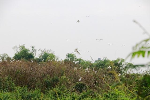 Mãn nhãn trước vườn chim hàng nghìn con bên sông Hoàng Long - 11