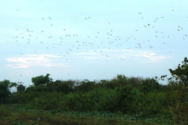 Đàn chim hàng nghìn con chao đảo trên bầu trời vào mỗi buổi chiều đổ về vườn chim sau một ngày đi kiếm ăn về.
