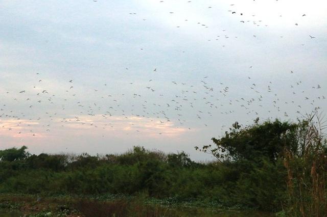 Mãn nhãn trước vườn chim hàng nghìn con bên sông Hoàng Long - 10