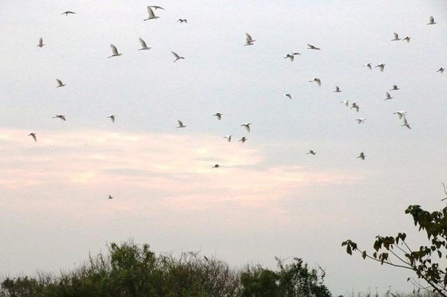 Mãn nhãn trước vườn chim hàng nghìn con bên sông Hoàng Long - 3