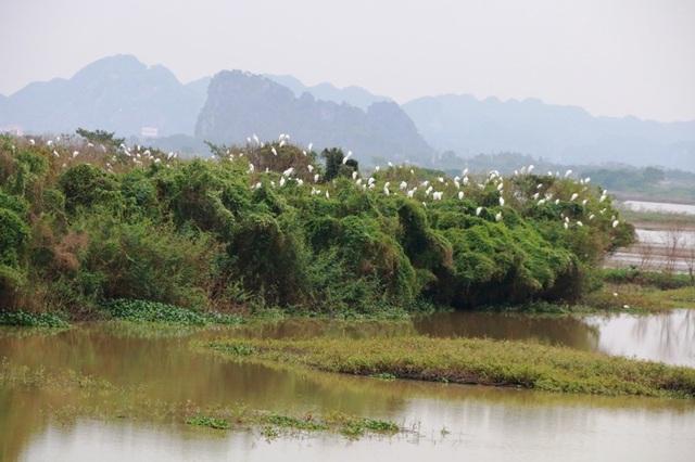 Mãn nhãn trước vườn chim hàng nghìn con bên sông Hoàng Long - 7