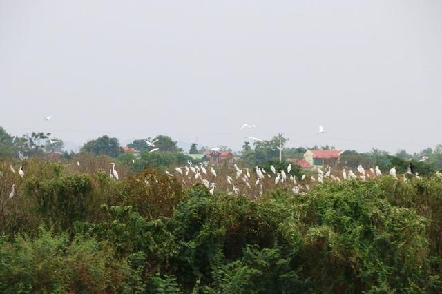 Mãn nhãn trước vườn chim hàng nghìn con bên sông Hoàng Long - 9