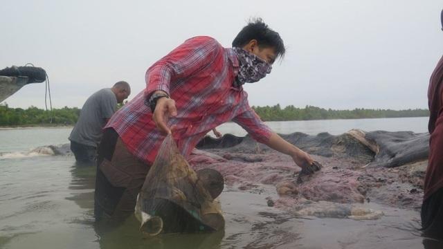 Một xác cá voi với 115 cốc nhựa trong bụng ở Indonesia - 1