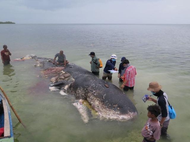 Một xác cá voi với 115 cốc nhựa trong bụng ở Indonesia - 2