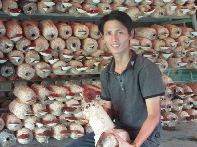Từ nghề trồng nấm, mỗi năm anh Hùng thu lãi 200 triệu đồng