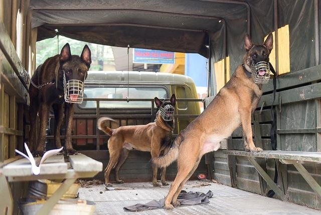 Khoảng gần 10 con chó nghiệp vụ được tăng cường quanh khu vực sân vận động Hàng Đẫy.