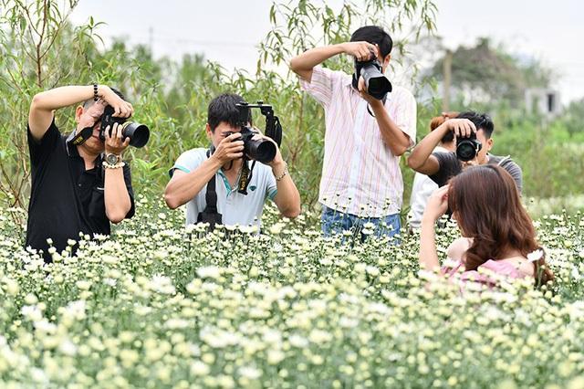 Vườn cúc họa mi trở thành phim trường vào mỗi cuối tuần. Nhiếp ảnh Lê Xuân Bách cho hay, anh kín lịch chụp chủ đề cúc hoạ mi suốt 2 tuần nay.