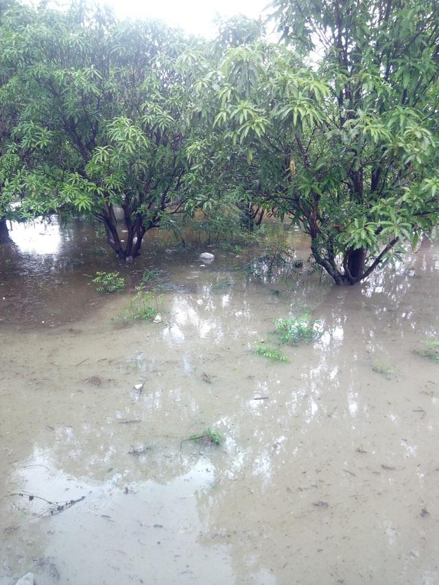 Nhiều vườn cây bị ngập trong nước
