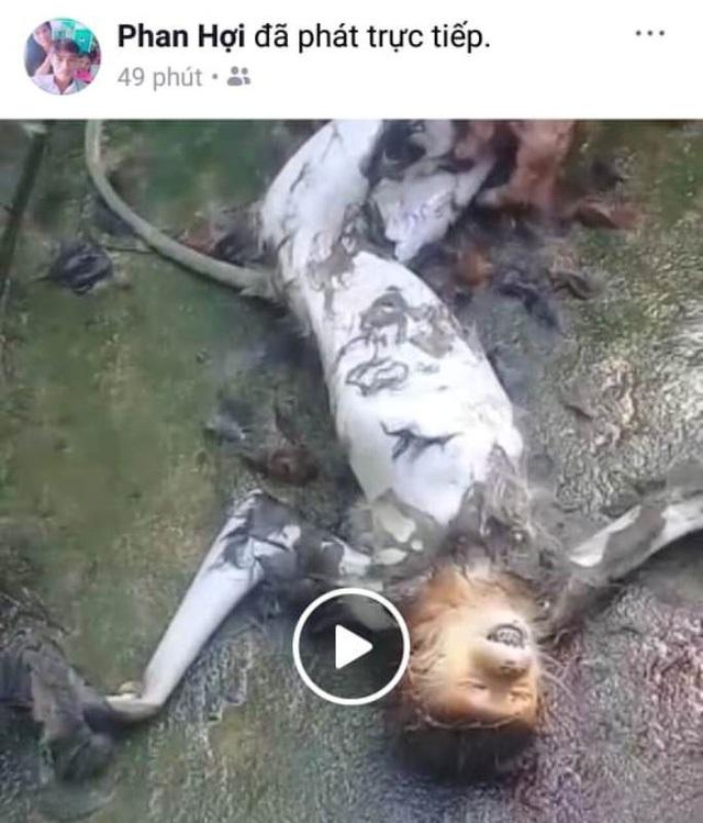 Một Facebook đã phát trực tiếp cảnh giết khỉ