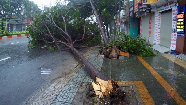 9h sáng ngày 25/11, bão số 9 đã áp sát bờ biển từ Bình Thuận đến Bến Tre, trọng tâm là khu vực Vũng Tàu. Dự kiến, trưa nay, bão số 9 sẽ đổ bộ vào đất liền các tỉnh này... Ghi nhận thực tế, đến giữa buổi sáng nay, một số khu vực đã có mưa to.