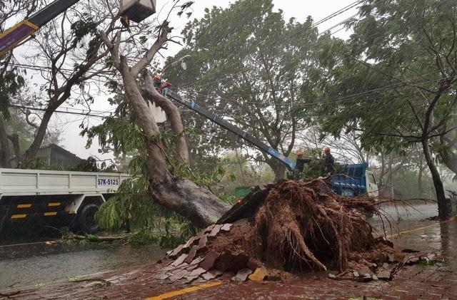 Hàng loạt cây gãy đổ ở Cần Giờ, TPHCM