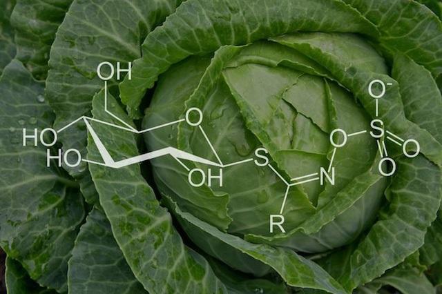 Bất ngờ với những lợi ích của bắp cải - 4