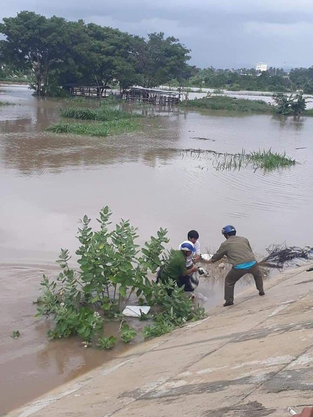 Giúp dân cứu gia súc bị trôi sông