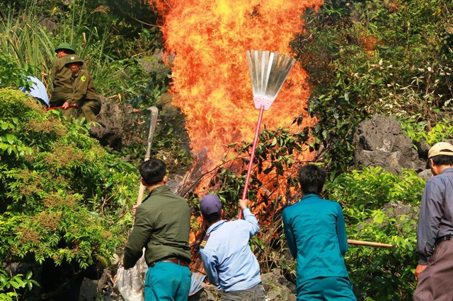 Nhận được tin báo, Chủ tịch UBND huyện Hoa Lư nhanh chóng ban hành lệnh khẩn cấp ứng phó với cháy rừng. Đồng thời, các lực lượng như: Kiểm lâm, Công an, Quân đội, Dân quân tự vệ, Cảnh sát PCCC… nhanh chóng được huy động, có mặt tại hiện trường để chữa cháy rừng, bảo vệ rừng đặc dụng và hệ sinh thái vùng lõi di sản.
