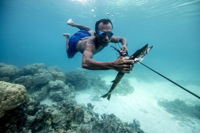 Người Bajau Laut có lá lách lớn hơn so với người bình thường.