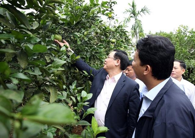 Phó Thủ tướng tham quan vườn mẫu của một thương binh cho nguồn thu 1,2 tỷ đồng/năm.