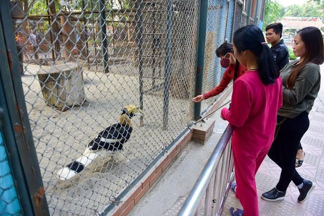 Đôi chim Hồng hoàng quý hiếm ở vườn thú Thủ Lệ - 10