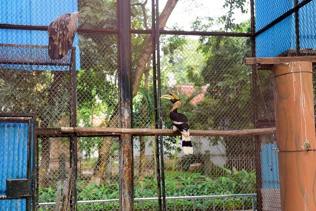 Hồng hoàng hay Phượng hoàng đất (tên khoa học Buceros bicornis) là thành viên to lớn nhất trong họ Hồng hoàng (Bucerotidae). Loài chim này sinh sống chủ yếu trong các khu rừng của Ấn Độ, Đông Nam Á và miền nam Trung Quốc. Hồng hoàng sống khá lâu, tuổi thọ đạt tới 50 năm trong điều kiện nuôi nhốt.