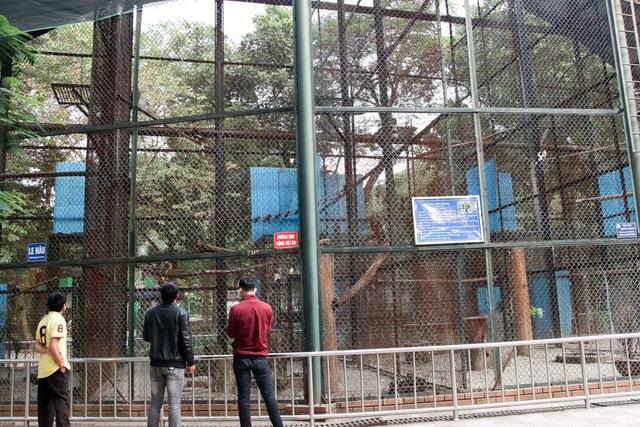 Đôi chim Hồng hoàng quý hiếm ở vườn thú Thủ Lệ - 12