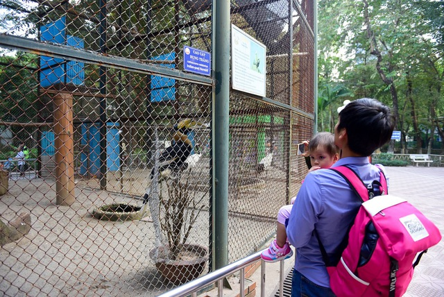 Hai cá thể chim Hồng hoàng gây sự quan tâm của nhiều du khách khi tới vườn thú Thủ Lệ bởi sự quý hiếm cũng như sự tò mò với cái tên Phượng hoàng đất gắn liền với nhiều câu chuyện dân gian.