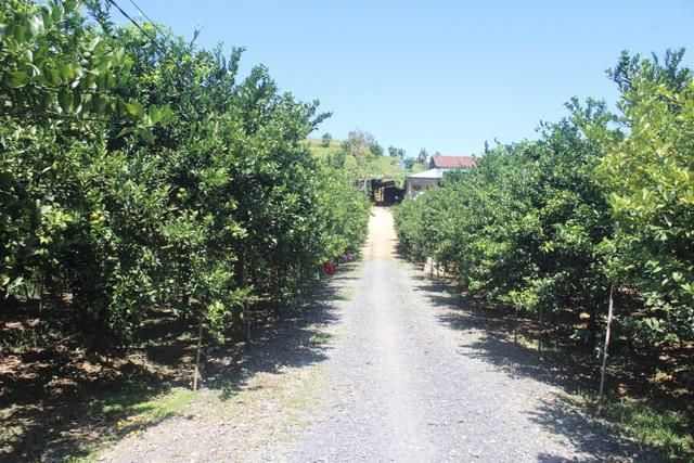 Lối vào trang trại quýt đường và bưởi da xanh của gia đình anh Cường