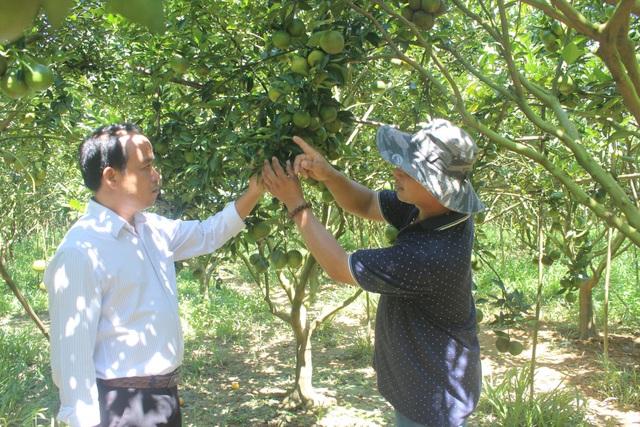 Anh Cường đang chia sẻ kinh nghiệm kỹ thuật chăm sóc cây ăn trái