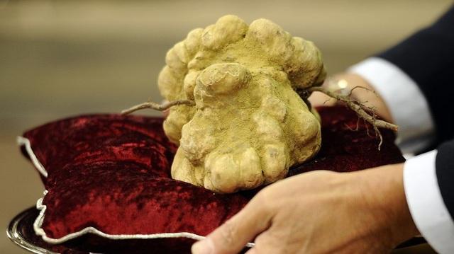 Đôi nấm cục trắng Alba vừa được bán với giá hơn 85.000 USD.